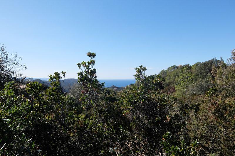 vista-lu-pinu-costa-paradiso (2)