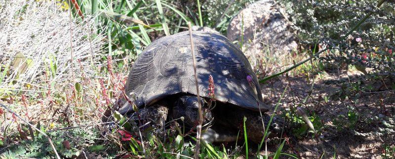 costa-paradiso-tartaruga
